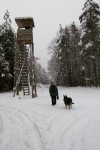Grażyna Dominiak - Las w Tychach - Aleja Bielska - 2004 12 15 - DOMINIAK AH